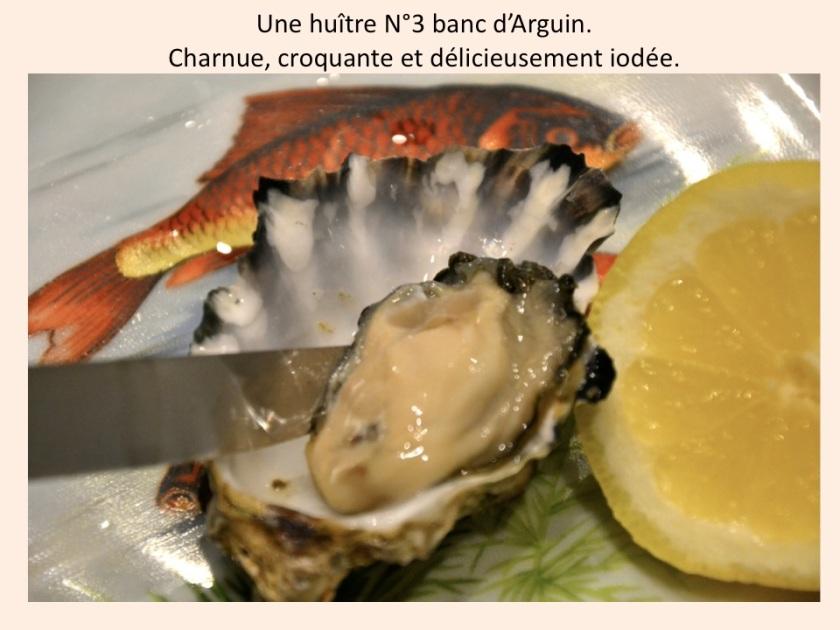Huître du Banc D'Arguin. Photo sophie Juby