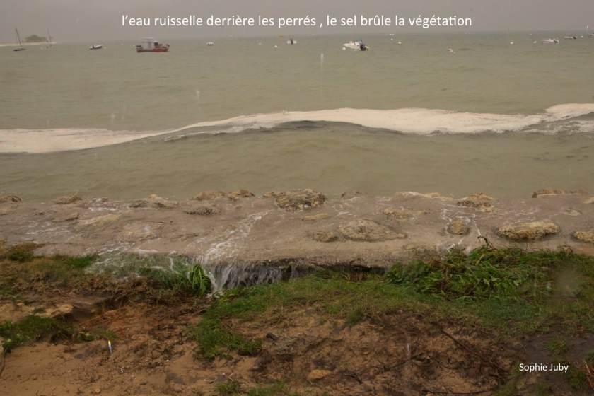 Erosion Cap Ferret