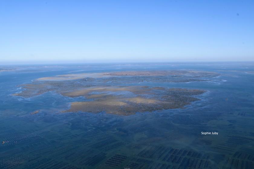 L'île aux oiseaux, bassin d'Arcachon